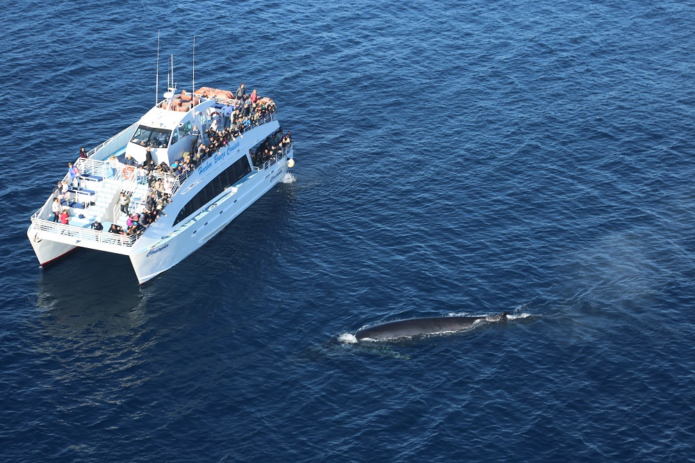 Aerial view of whale swimming by boat